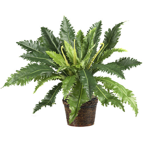 Nearly Natural 22 in. Marginatum Silk Plant with Wicker Basket