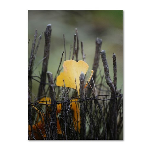 Trademark Fine Art Philippe Sainte-Laudy 'Prisoner Fall' Canvas Art 16x24 Inches