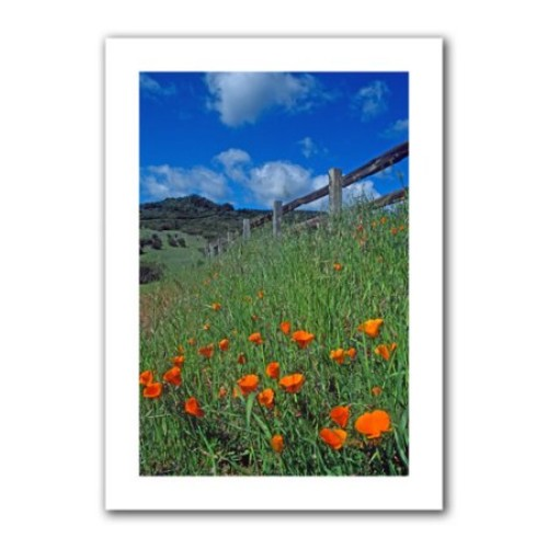 Artwal Kathy Yates Poppies and The Fence Unwrapped Canvas Art, 12 x 18 Inch