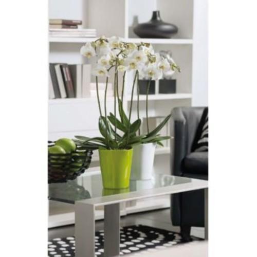SKUSA Malaga Clay Pot Planter; Shiny Lime
