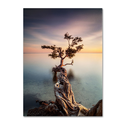 Trademark Global Moises Levy 'Water Tree III' Canvas Art [Overall Dimensions : 14x19]