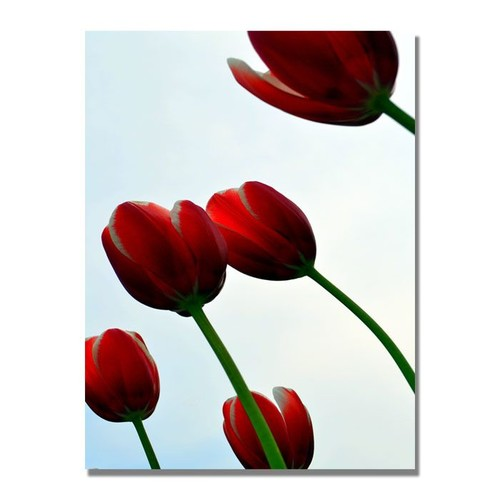Trademark Global Michelle Calkins 'Red Tulips from the Bottom Up' Canvas Art [Overall Dimensions : 18x24]