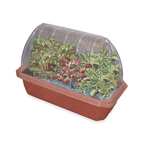 Fly Trap Fiends Windowsill Greenhouse