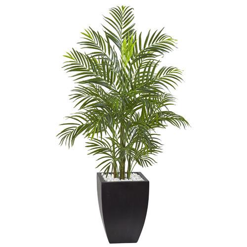 Areca Palm Tree in Planter