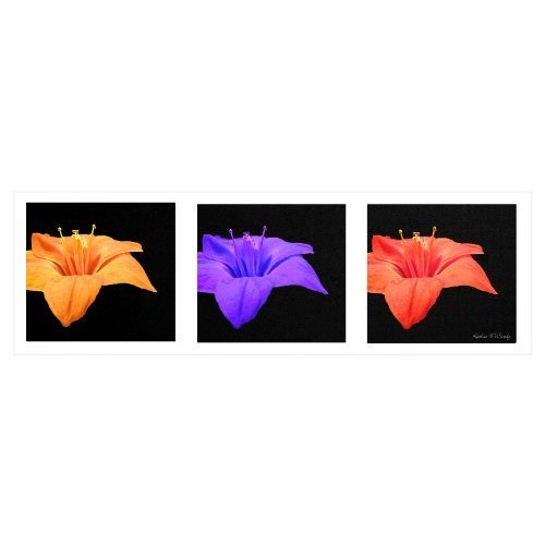 Amaryllis Tryptic by Kathie McCurdy work, 6 by 19-Inch Canvas Wall Art
