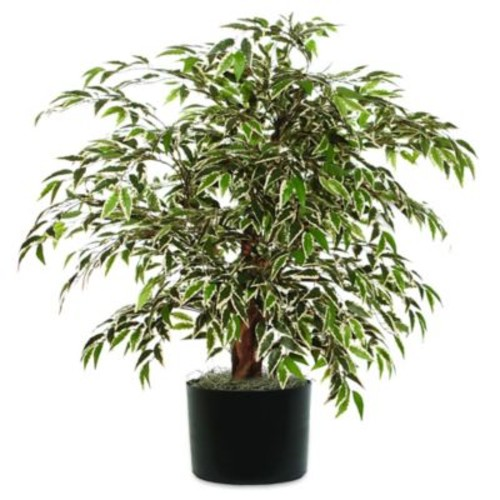 4-Foot Fabric Variegated Smilax Extra-Full Bush with Black Pot