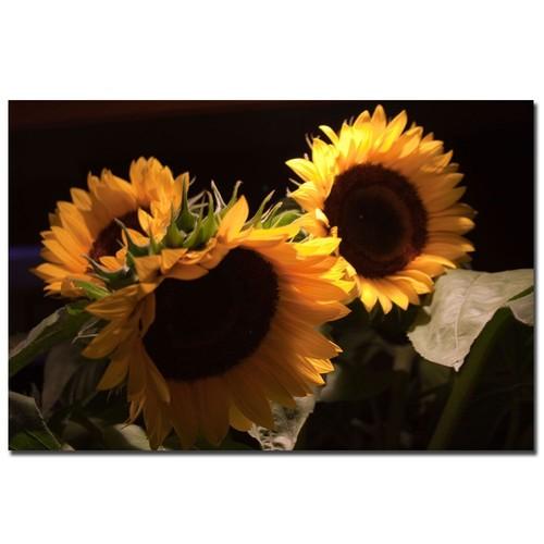 Trademark Global Martha Guerra 'Sunflower I' 16
