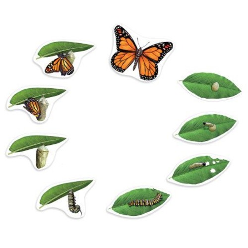 Giant Magnetic Butterfly Life Cycle by LearningResources