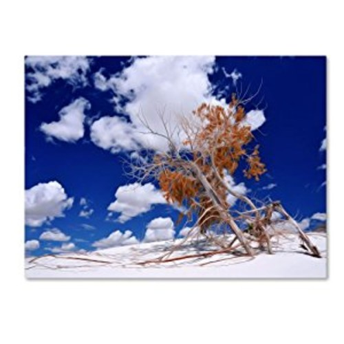Burn Tree by Philippe Sainte-Laudy, 14 by 19-Inch Canvas Wall Art [14 by 19-Inch]