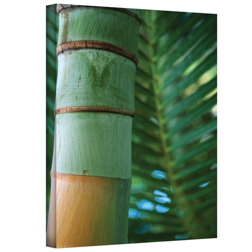 Kathy Yates 'Bamboo and Fern' Canvas Art