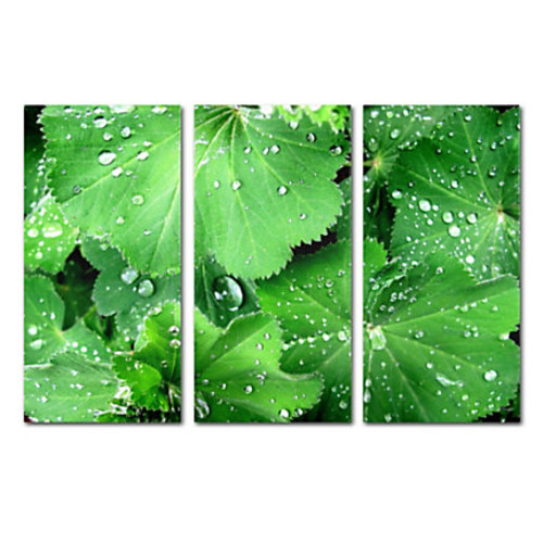 Trademark Global Water Droplets Gallery-Wrapped Canvas Print By Kathie McCurdy, 32