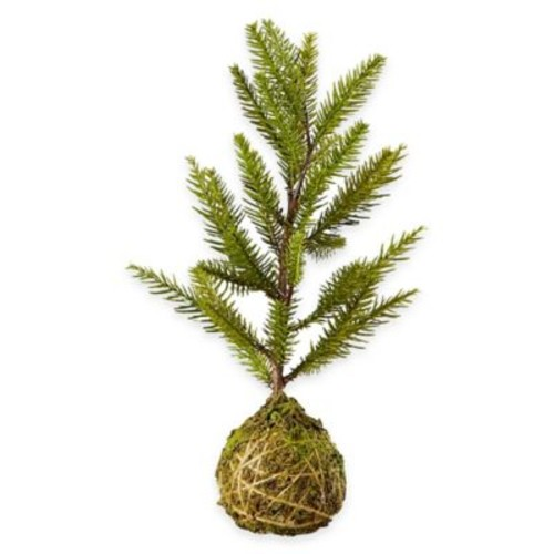 11-Inch Chalet Nordic Pinetree/Root Ball