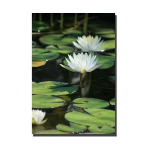 Trademark Fine Art 22 in. x 32 in. Lovely Lillies Canvas Art