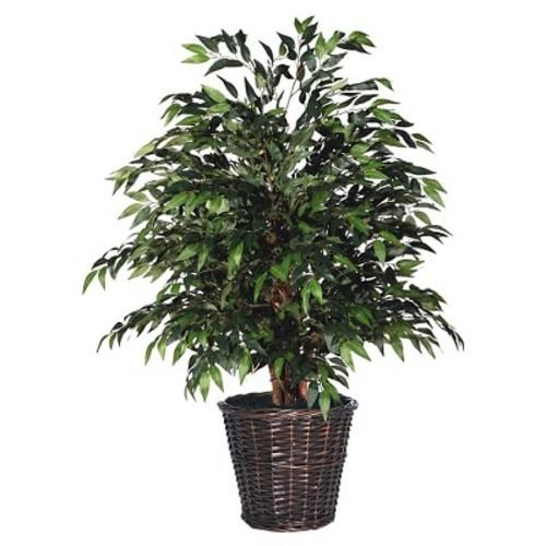 Smilax Extra Full Bush - Green (4ft)