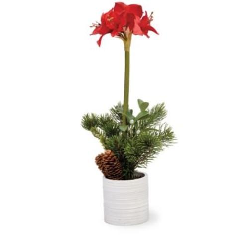Boston International Amaryllis Topiary Pot