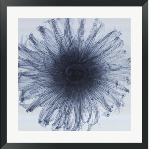 Dahlia by Steven N. Meyers Framed Photographic Print