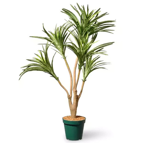 3 Ft. Potted Dracaena Plant