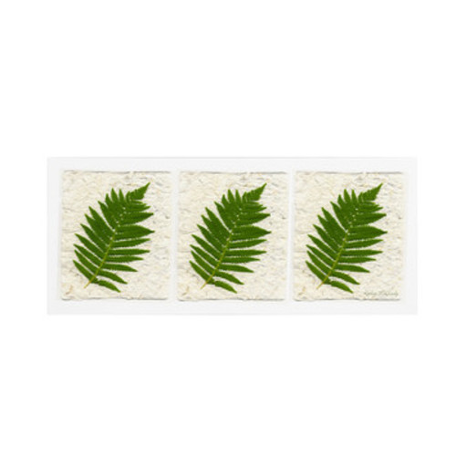 'Ferns Finish' by Kathie McCurdy Framed Photographic Print on Wrapped Canvas