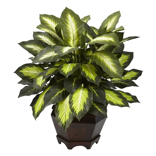 nearly natural Triple Golden Dieffenbachia Plant