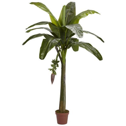 6' Banana Silk Tree Real Touch