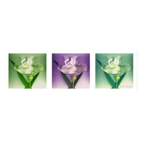 'Three White Iris' by Kathie McCurdy 3 Piece Photographic Print on Canvas Set