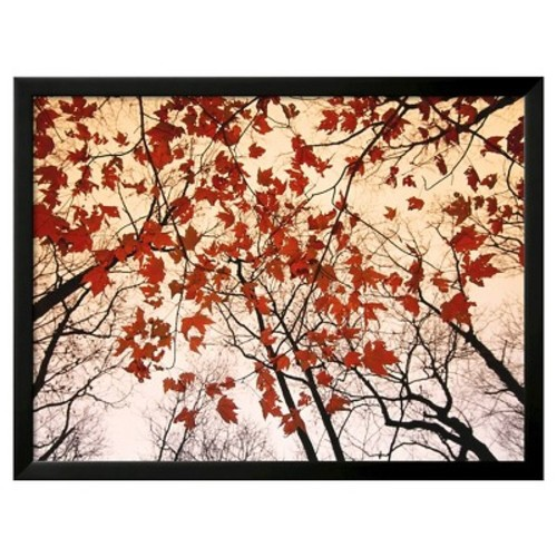 Art.com - Red Maple and Autumn Sky by Raymond Gehman