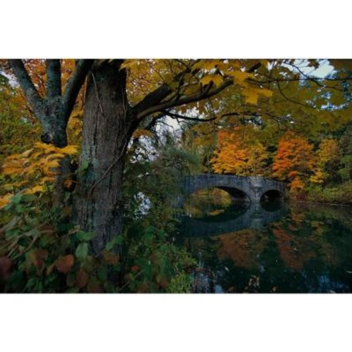 National Geographic 72 in. H x 48 in. W Fall Foliage Wall Mural