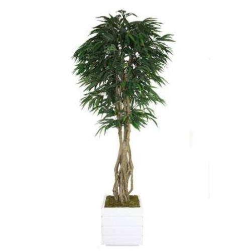 Laura Ashley 84 in. Tall Willow Ficus with Multiple Trunks in 14 in. Fiberstone Planter