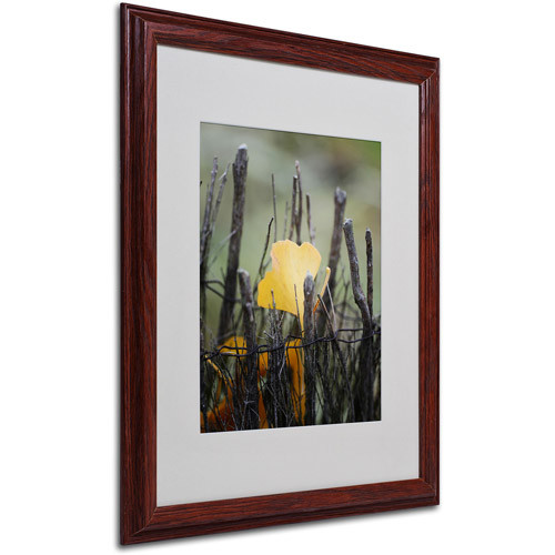 Prisoner Fall Canvas Wall Art by Philippe Sainte-Laudy, Wood Frame, 16 by 20-Inch [16 by 20-Inch]