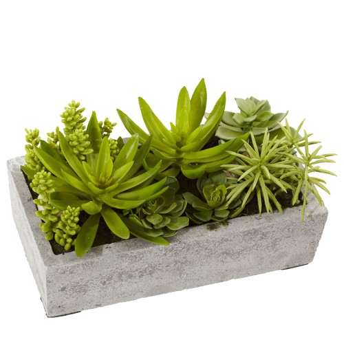 Succulent Garden in Cement Planter by Nearly Natural