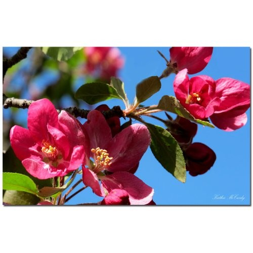 Apple Blossoms by Kathie McCurdy, 14x19-Inch Canvas Wall Art [14 by 19-Inch]