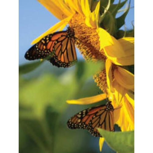 Butterfly Sunflower Blank Journal