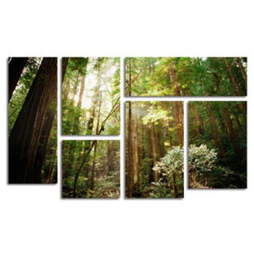Trademark Global 'Muir Woods' by Ariane Moshayedi 6 Piece Canvas Art Set